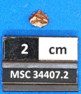 Ginglymostoma moroccanum