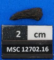 Odontaspididae