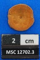 Carcharhiniformes