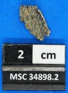 Aetiobatus sp.