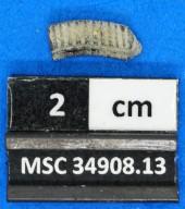 Myliobatiformes
