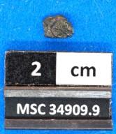 Myliobatidae