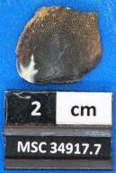Cochliodontiformes