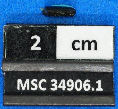 cf. Meridiania sp.