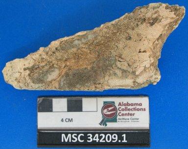 Edaphodon cf. mirificus