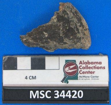Edaphodon cf. E. mirificus