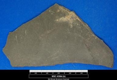Arenicolites longistiatus