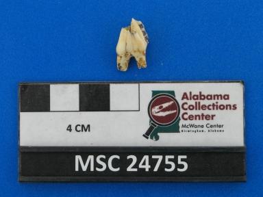 Odocoileus virginianus?