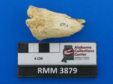 Odocoileus virginianus