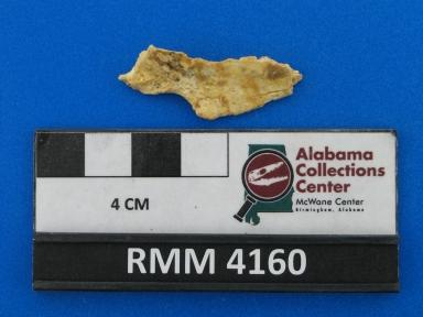 Urocyon cinereoargenteus