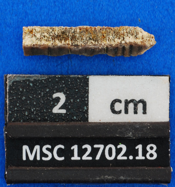 Eoplinthicus yazooensis