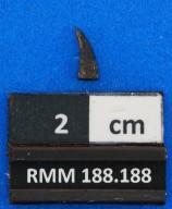 Brychaetus muelleri