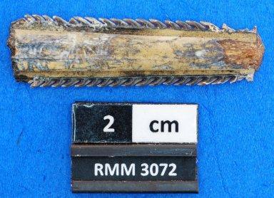Myliobatis sp.