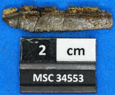 Chomatodus sp.